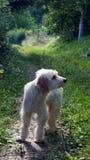 Matin de chien de rue au printemps images stock