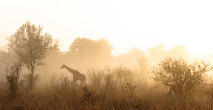 Matin de Kruger Images stock