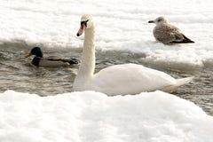 Matin de l'hiver Images libres de droits