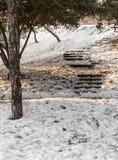 Matin de l'hiver Photographie stock
