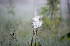 Matin de toile d'araignée Photographie stock libre de droits