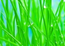 matin de vert d'herbe de rosée de fond à Photographie stock libre de droits