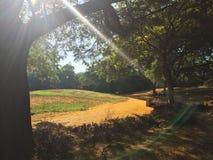 Matin en parc Images libres de droits