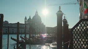 Matin ensoleillé à Venise, les mouettes se reposent sur des piliers pour amarrer des gondoles, banque de vidéos