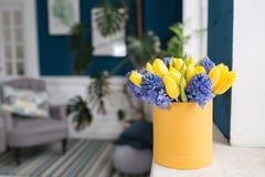 Matin ensoleillé de source Fleurit le bouquet dans la boîte Groupe de jacinthes bleues et de tulipes jaunes sur le rebord de fenê Photos libres de droits