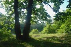 Matin ensoleillé en clairière de forêt Image libre de droits