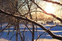 Matin ensoleillé lumineux d'hiver Photos libres de droits