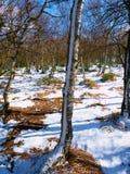 Matin froid et brumeux tôt à l'herbe de gelée sur la montagne, vue au-dessus d'herbe congelée et rochers aux arbres et à la colli Image libre de droits