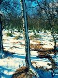 Matin froid et brumeux tôt à l'herbe de gelée sur la montagne, vue au-dessus d'herbe congelée et rochers aux arbres et à la colli Images stock