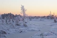 Matin givré au paysage de forêt avec de l'eau les usines, les arbres et congelés Photographie stock libre de droits