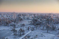 Matin givré au paysage de forêt avec de l'eau les usines, les arbres et congelés Photos stock