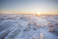 Matin givré au paysage de forêt avec de l'eau les usines, les arbres et congelés Photographie stock