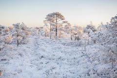 Matin givré au paysage de forêt avec de l'eau les usines, les arbres et congelés Image stock