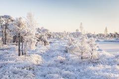Matin givré au paysage de forêt avec de l'eau les usines, les arbres et congelés Image libre de droits
