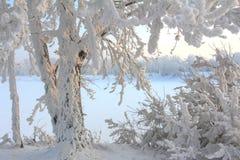 Matin givré d'hiver sur la berge Photo stock
