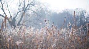 Matin givré dans la forêt Photo libre de droits