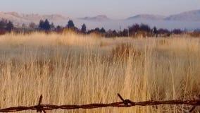 Matin givré de haut désert de brouillard d'automne photos stock