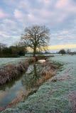 Matin givré, réflexions de rivière d'arbre Photos stock
