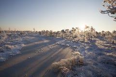 Matin givré au paysage de forêt avec de l'eau les usines, les arbres et congelés Images stock