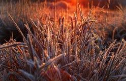 Matin glacial Photos libres de droits