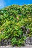 Matin Glory Wall Photo stock