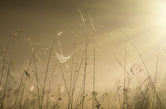 Matin élevé d'automne d'herbe au lever de soleil et au brouillard Images libres de droits