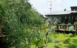 Matin lumineux sur peu de cottage du côté d'étang vert de mauvaise herbe et de lotus de l'eau de canard dans le jardin secret Image libre de droits