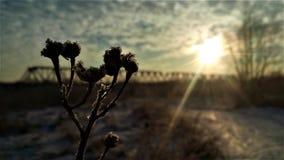 Matin pendant l'hiver images libres de droits