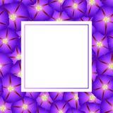 Matin pourpre Glory Flower Banner Card Border Illustration de vecteur illustration stock