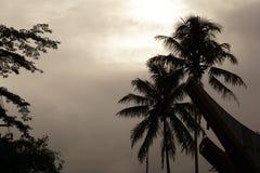Matin sombre à la route de toraja Photographie stock libre de droits