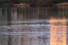 Matin sur le lac Wolfsburg, Allemagne photo stock