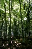matin tôt de forêt photo libre de droits