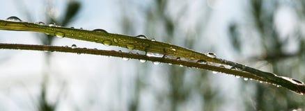 Matin Waterdrops Photos libres de droits