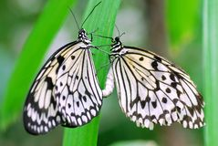 Mating Paper Kites Royalty Free Stock Photos