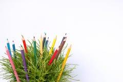 matita di colore e cespuglio verde Fotografia Stock Libera da Diritti