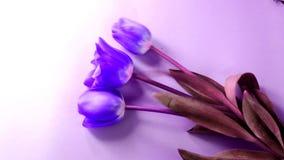 Matizado, arte, configuração roxa, lilás, pintada, lisa, flores, tulipas, rosa, coral, ninguém, superior, hastes, botões, fundo,  video estoque