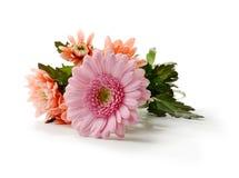 Matka dnia kwiaty Fotografia Royalty Free