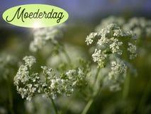Matka dnia wizerunek z białymi kwiatami i słowa moederdag w holenderze obrazy stock