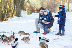 Matka i dwa małej rodzeństwo chłopiec karmi kaczki w zimie. Fotografia Stock