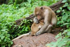 Matka i dziecko małpa obraz stock