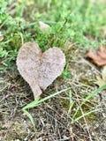 Matka Natura kocha ciebie Zdjęcie Royalty Free