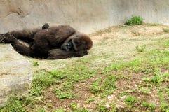 Matka odpoczywa z dzieckiem Zdjęcia Royalty Free