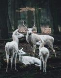 Matki i dziecka jelenia pozycja przy krawędzią drewna obraz royalty free