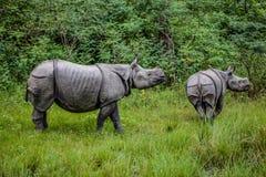 Matki i dziecka nosorożec stojak w wysokiej trawie przed wielkimi zwartymi drzewami zdjęcia royalty free