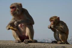 Matki i dziecka rhesus makak Obrazy Royalty Free