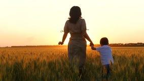 Matki i syna bieg, trzyma ręki Sylwetka szczęśliwa rodzina w pszenicznym polu przy zmierzchem zbiory