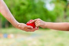 Matki miłość w ręce na palmie, Fotografia Royalty Free