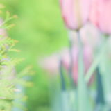 Matki wielkanocy lub dnia tulipanu karta - Akcyjne fotografie Zdjęcia Royalty Free