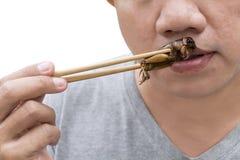 Matkryp: Man som äter syrsakrypet på pinnar Syrsor friterade frasigt för äter som matmellanmålet, det är den bra källan av royaltyfri foto