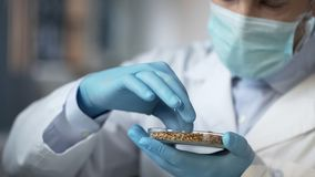 Matlaboratoriumarbetare som kontrollerar försiktigt kvalitet av sädesslagskörden för export arkivfoton